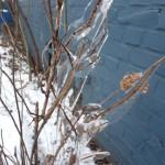 Eis im Dortmunder Hafen