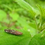 Unbekanntes Insekt auf der faulen Haut
